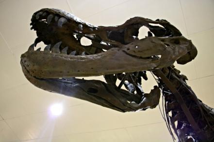 Stan T-Rex 6