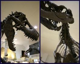 Stan T-Rex 7