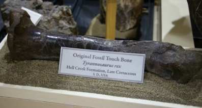 T-Rex Bone