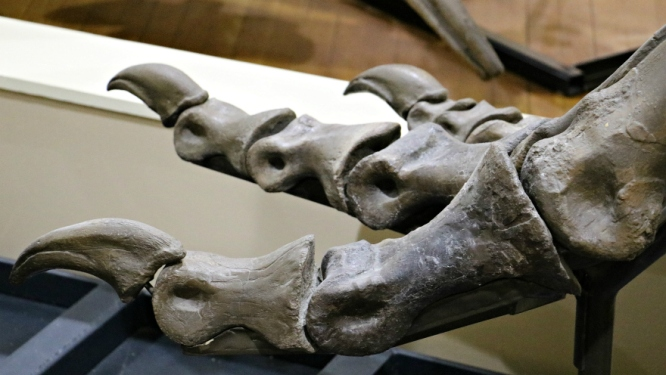 T-Rex Toes