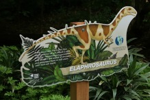 Milwaukee-Zoo-Elaphrosaurus-1