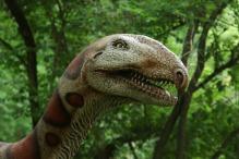 Milwaukee-Zoo-Elaphrosaurus-2