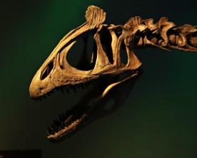 Arctic-Dinosaur-Exhibit-Cryolophosaurus-2