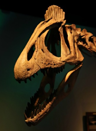 Arctic-Dinosaur-Exhibit-Cryolophosaurus-3