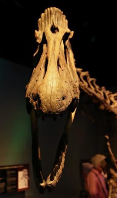 Arctic-Dinosaur-Exhibit-Cryolophosaurus-4