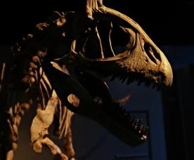 Arctic-Dinosaur-Exhibit-Cryolophosaurus-6