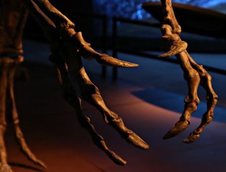 Arctic-Dinosaur-Exhibit-Cryolophosaurus-7