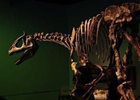 Arctic-Dinosaur-Exhibit-Cryolophosaurus-8