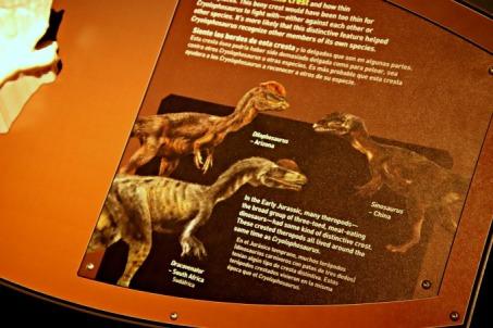 Arctic-Dinosaur-Exhibit-Cryolophosaurus-Signage-1