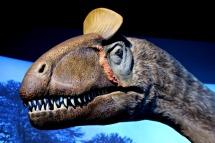 Cryolophosaurus-Replica-3