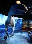 Cryolophosaurus-Replica-5