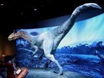 Cryolophosaurus-Replica-6