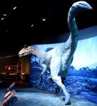 Cryolophosaurus-Replica-9