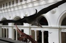 Quetzalcoatlus-Field-Museum-10