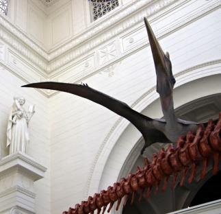 Quetzalcoatlus-Field-Museum-4