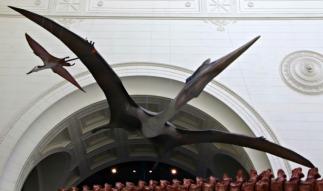 Quetzalcoatlus-Field-Museum-5
