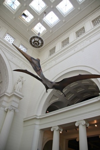 Quetzalcoatlus-Field-Museum-7