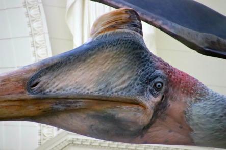 Quetzalcoatlus-Field-Museum-8