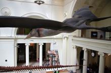 Quetzalcoatlus-Field-Museum-9