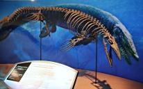Taniwhasaurus-antarcticus-1