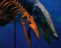 Taniwhasaurus-antarcticus-2