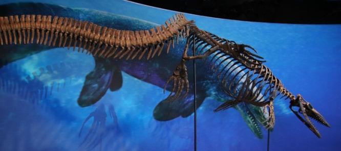 Taniwhasaurus-antarcticus-4