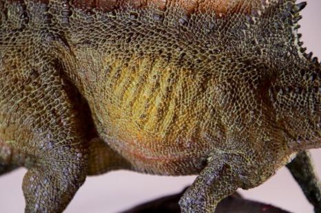 PNSO Spinosaurus Ribs