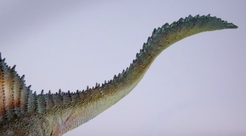 PNSO Spinosaurus Tail 1